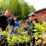 Forårs plantemarked i Kibæk.